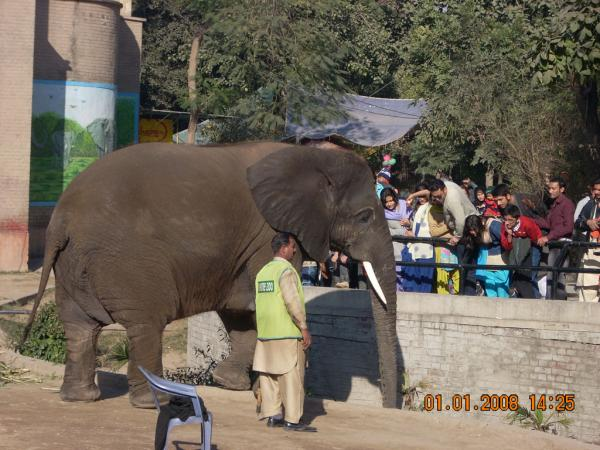 a visit of lahore zoo The study of public perception for captive animals at lahore zoo, pakistan s ahmad, z ali,  later ones, a major ratio of visitors still visit the zoo for.